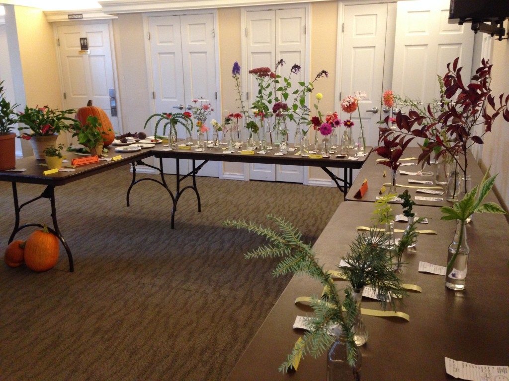 "Horticulture exhibits at ""Fall Frolic"" Small Standard Flower Show 10/14/2015"